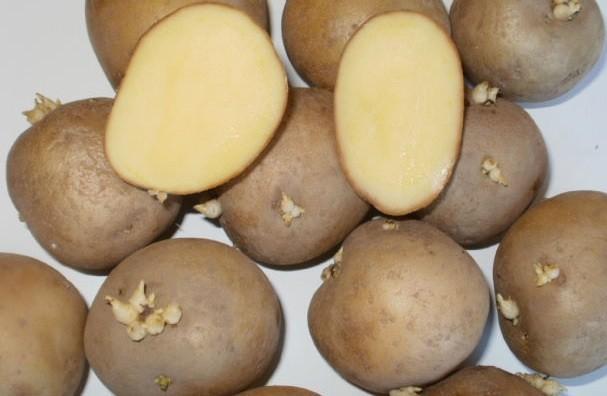 картофель каратоп