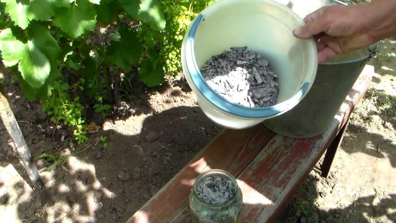 удобрение винограда золой