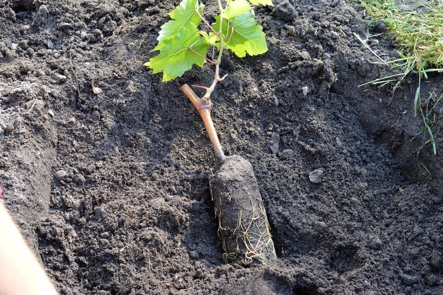 Дорожка из искусственной травы в саду фото идея