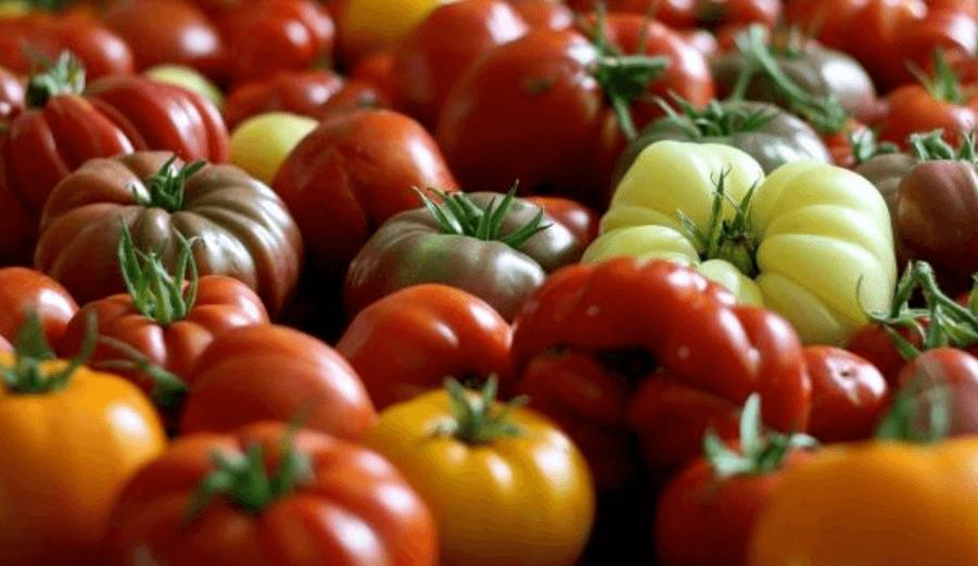 томат японский краб
