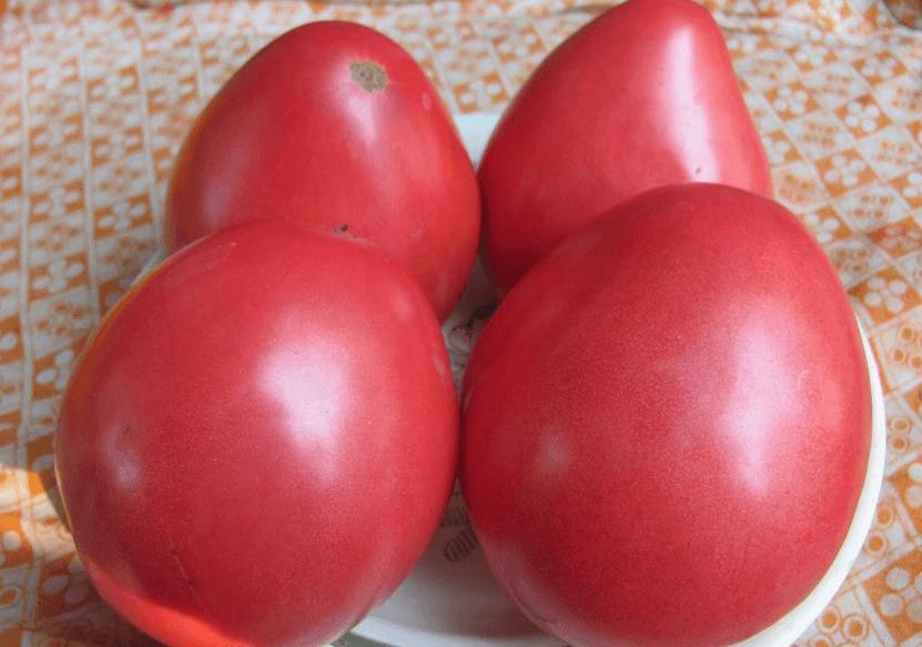 томат севрюга
