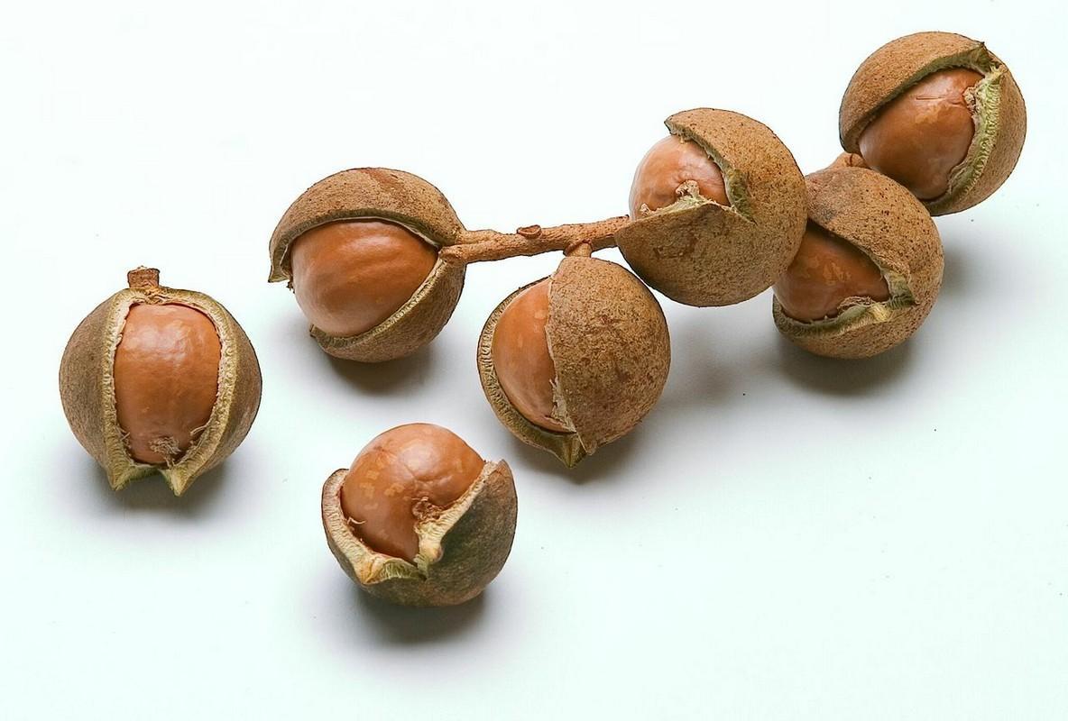 орехи макадамия