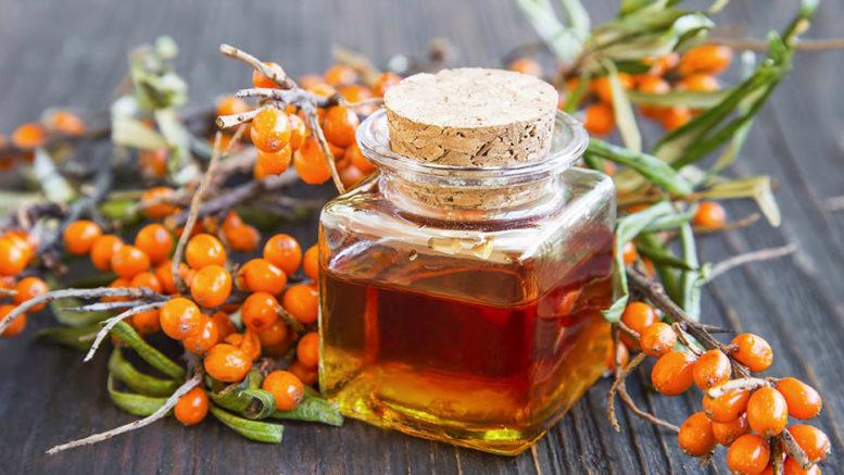 Облепиха масло полезные свойства и противопоказания