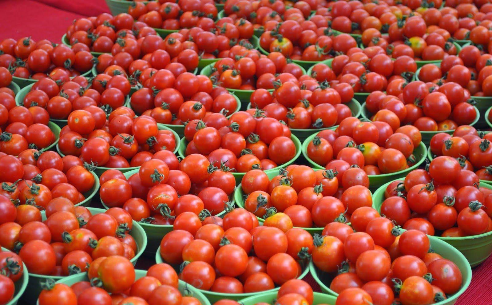 томаты польза и вред
