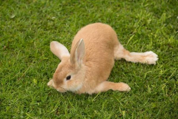 у кролика больные суставы