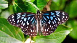 Кто ест бабочек?