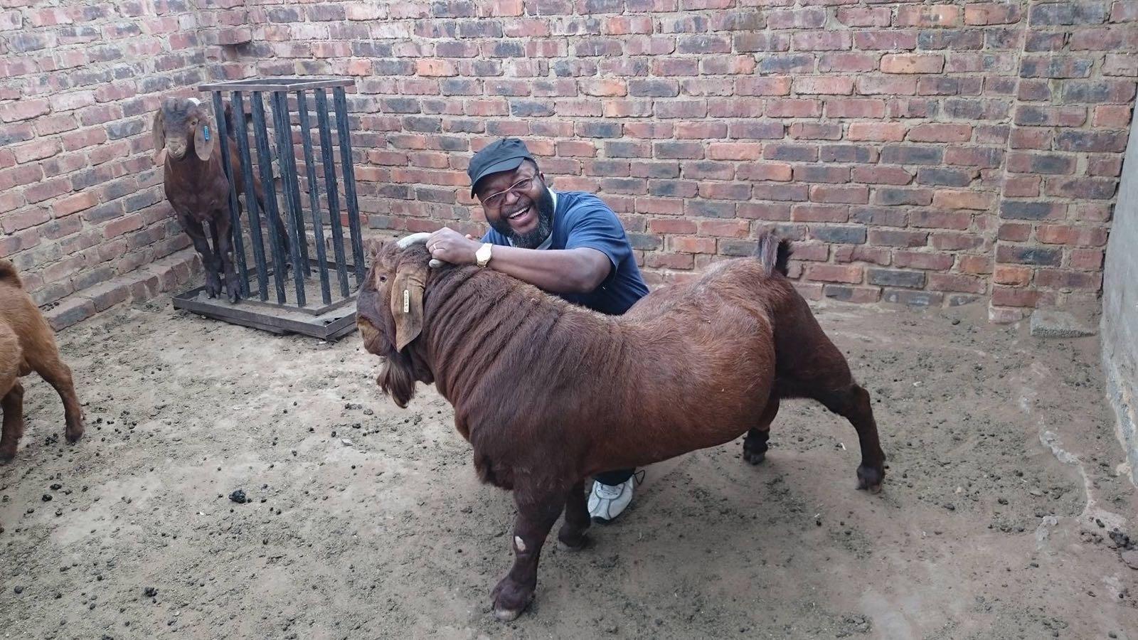 калахарская красная коза