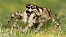 Кто ест пауков?