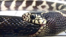 Кто ест змей?