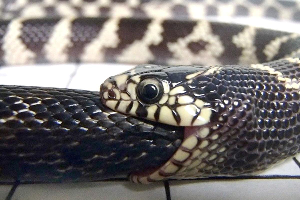 змея ест себя