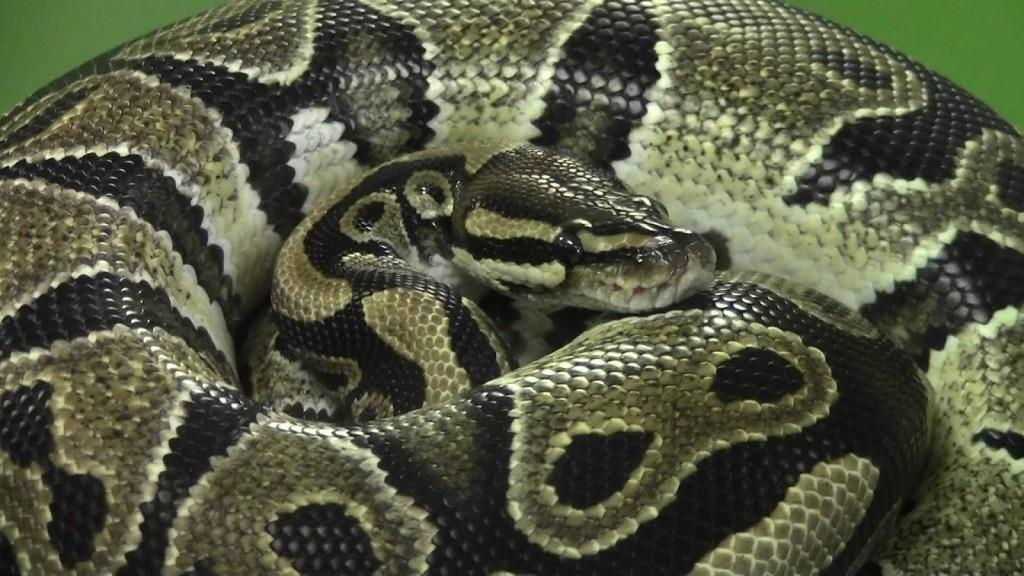 сон змеи