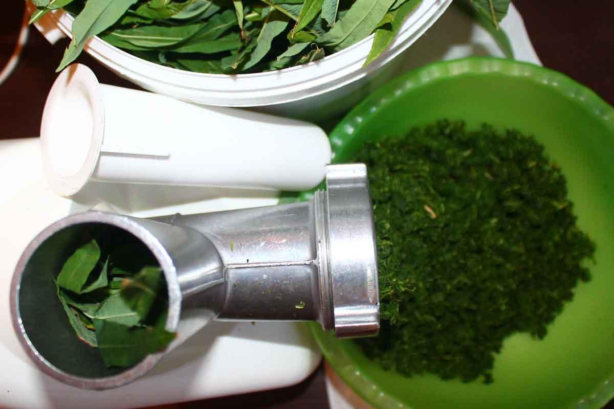 Иван чай ферментация в домашних условиях