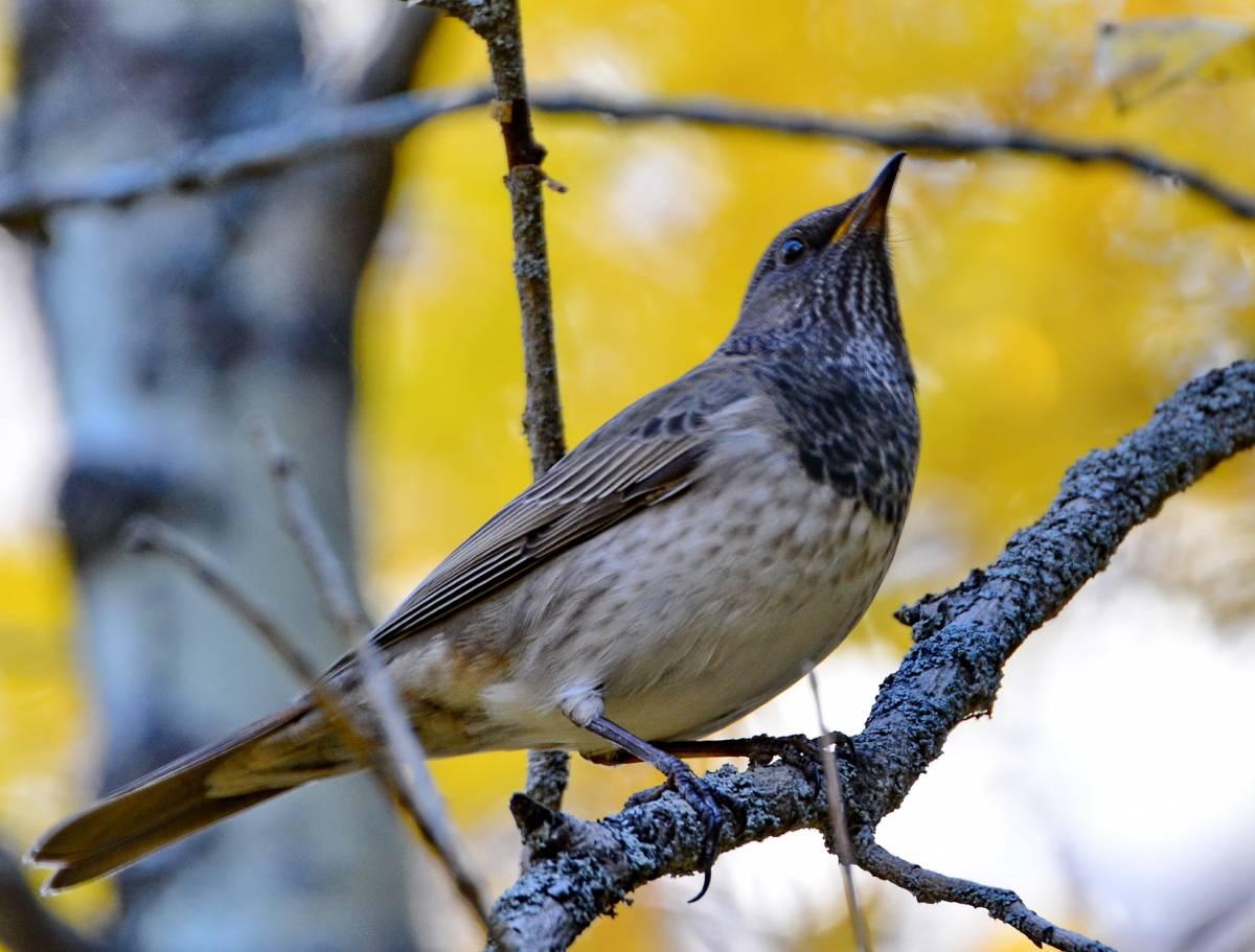 Самые прикольные фото птиц них