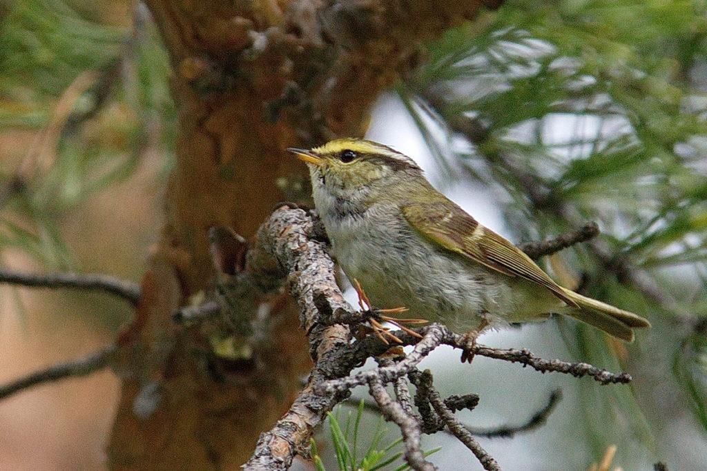 ровные лесные птицы подмосковья фото с названиями самом деле, фукусиме
