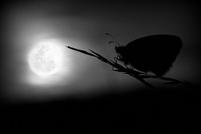 почему мотыльки летят на свет