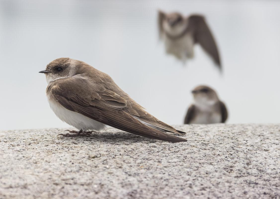 птицы ленинграда