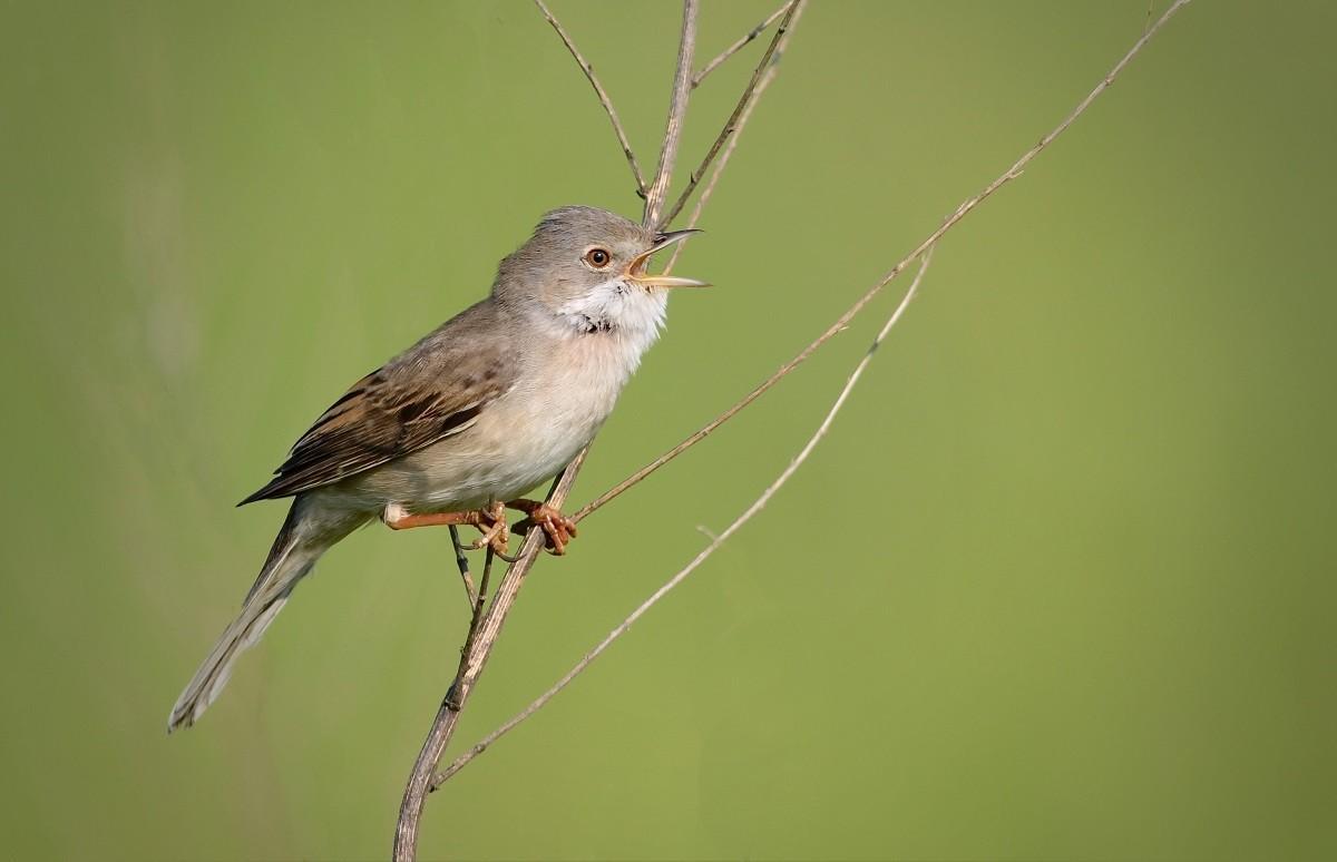 Фото и описание птиц Подмосковья