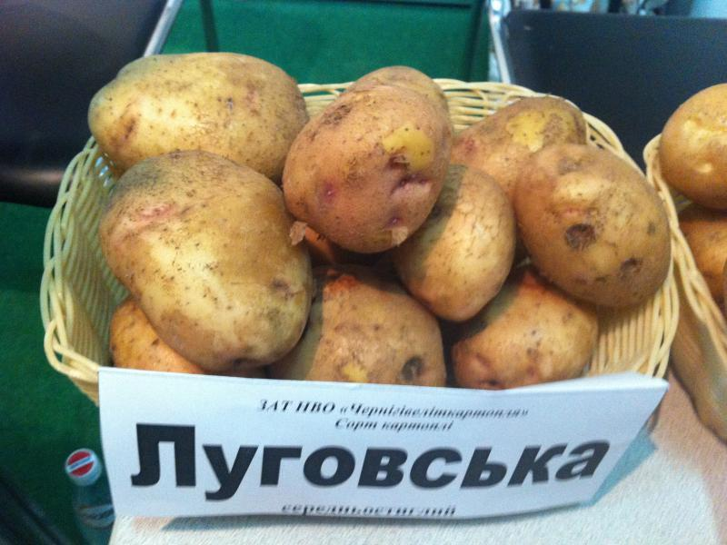 картофель луговской