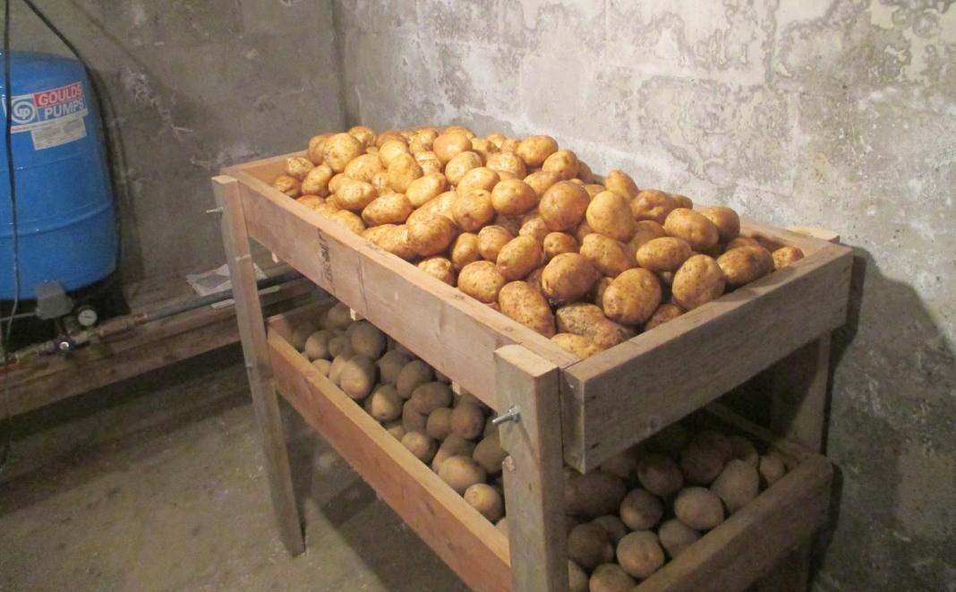 хранение картофеля зекура