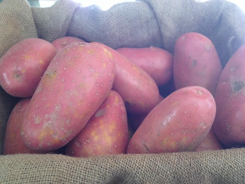 картофель лаура