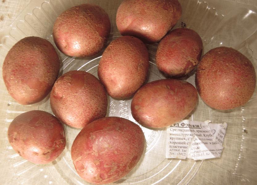 картофель Ред Фэнтези