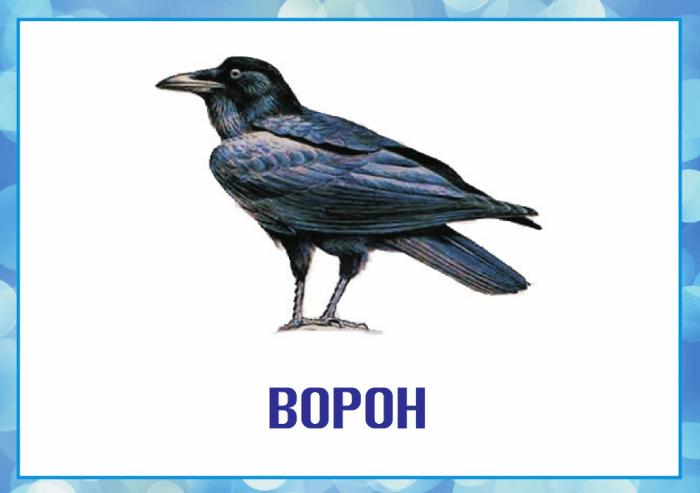 Картинки с птицами для детей детского сада