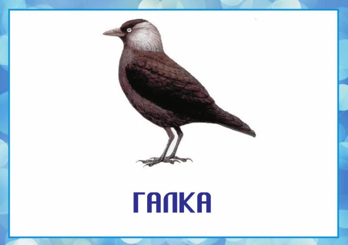 Картинки зимующих птиц с названиями для детей