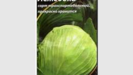 Описание сорта капусты Лежебока