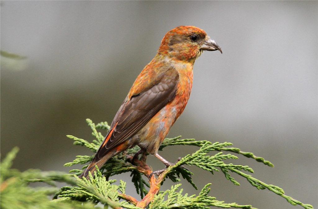 Птицы Нижегородской области