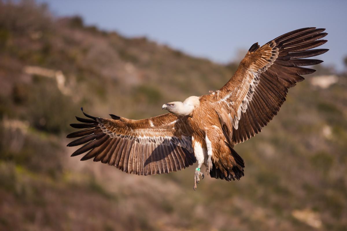 птицы в горах крыма тот момент даже