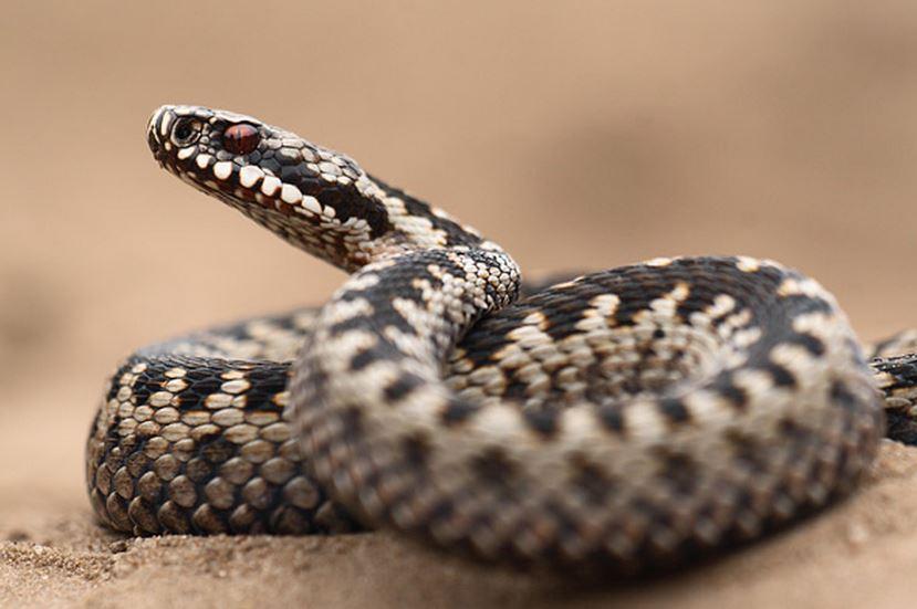 Описание змей Ростовской области