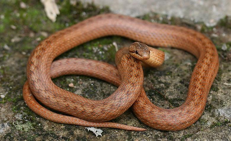 Какие есть змеи в Ленинградской области